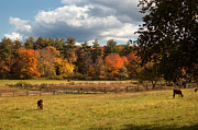 Autumn Scenes Metal Prints - Grazing on the Farm Metal Print by Joann Vitali