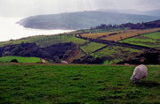 Antrim Photos - Grazing Sheep County Antrim Northern Ireland by Thomas R Fletcher