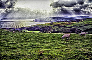 Fields Digital Art Prints - Grazing Sheep Dramatic Sky Print by Thomas R Fletcher