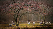 Dreamy Green Trees In Nature Acrylic Prints - Grazing sheep Acrylic Print by Hugo Bussen