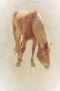 Equestrian Prints Art - Grazing Time by Tom York