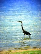 Joyce Dickens - Great Blue Heron At Prospect Lake
