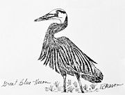 Blue Heron Drawings Prints - Great Blue Heron Print by Becky Mason