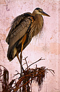 Great Blue Heron Print by Debra and Dave Vanderlaan