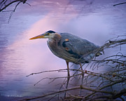 Foggy Digital Art Prints - Great Blue Heron Fishing Print by J Larry Walker