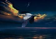 Andrea Kollo - Great Blue Heron in Flight