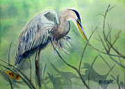 Randy Bell - Great Blue Heron of Palm...