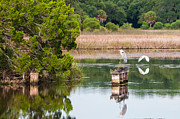Lowcountry Prints - Great Blue Heron on the Old Trestle Print by Scott Hansen