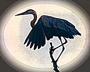 All - Great Blue Heron - posterized image by R Thomas Brass