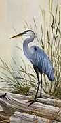 Watercolor Artist Prints - Great Blue Heron Shore Print by James Williamson