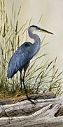 Driftwood Framed Prints - Great Blue Heron Splendor Framed Print by James Williamson