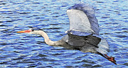 William Wooding - Great Blue Heron