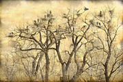 Colonies Framed Prints - Great Blue Herons Colonies Fine Art Framed Print by James Bo Insogna