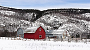 Red Barn In Winter Photos - Great Canadian Red Barn in Winter by Peter v Quenter