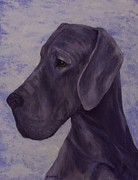 Working Dogs Framed Prints - Great Dane Blue Uncropped Framed Print by Barb Yates