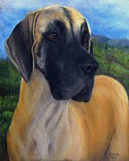 Working Dogs Pastels Framed Prints - Great Dane Fawn Framed Print by Barb Yates