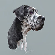 Dog Portrait Digital Art Originals - Great Dane by Marina Likholat