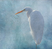 Great Egret Posters - Great Egret 2 Poster by Angie Vogel