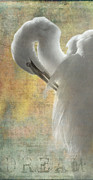 Great Birds Posters - Great Egret Dream Poster by Angie Vogel