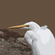 Bob and Jan Shriner - Great Egret in Rocks