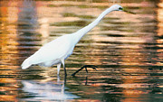 Animal Themes Painting Prints - Great Egret in shallow water Print by Odon Czintos