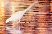One Animal Painting Posters - Great Egret in water Poster by Odon Czintos