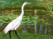 Great Drawings - Great Egret by Jean Pacheco Ravinski