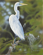 Moss Green Drawings Prints - Great Egret Print by Michael Ashmen