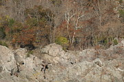 Great Prints - Great Falls VA - 12128 Print by DC Photographer