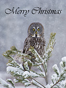 Animal Pics Prints - Great Gray Owl Christmas Card 1 Print by Michael Cummings