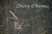 Wildlife Metal Prints - Great Gray Owl Christmas Card 8 Metal Print by Michael Cummings
