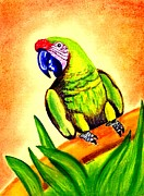 Macaw Pastels - Great Green Macaw by Olde Time  Mercantile