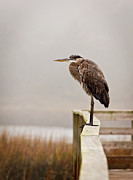 Great Heron Photos - Great Heron by Matthew Trudeau