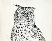 Alfred Ng - great horn owl