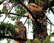 Larry Trupp - Great Horned Owl and Baby