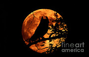 Kenneth W Fink - Great Horned Owl And Moon