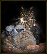 Great Horned Owl And Owlets Print by Angel Cher