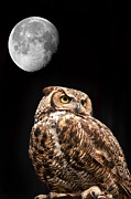 Nocturnal Animal Print Framed Prints - Great Horned Owl Framed Print by Brandon Alms
