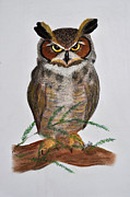 Woodland Pastels Originals - Great Horned Owl by Danae McKillop