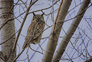 North Thompson Photos - Great Horned Owl by Gary Hall