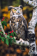 Autumn Photos Posters - Great Horned Owl III Poster by Todd Bielby