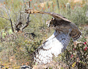 Old Pueblo Photography - Great Horned Owl In...