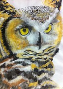 Great Drawings - Great horned owl by Jillian Bunton