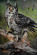 Deborah Benoit - Great Horned Owl on...