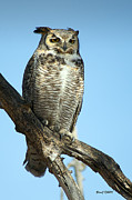 Stephen  Johnson - Great Horned Owl