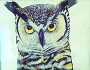 Watercolors Drawings - Great horned owl two by Jillian Bunton