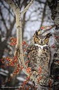 LeeAnn McLaneGoetz McLaneGoetzStudioLLCcom - Great Horned Owl Wise and knowing