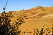 Sand Dunes Painting Framed Prints - Great Sand Dunes Trail Framed Print by Steve Bailey