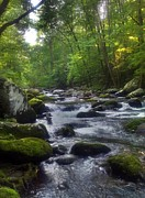 Janice Spivey - Great Smoky Mountain...