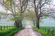 Haze Photo Prints - Great Smoky Mountains National Park Cades Cove Country Road Print by Dave Allen
